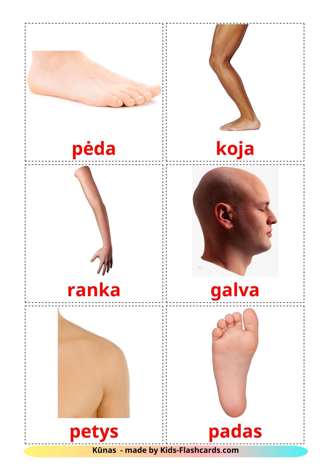 Body Parts - 26 Free Printable lithuanian Flashcards