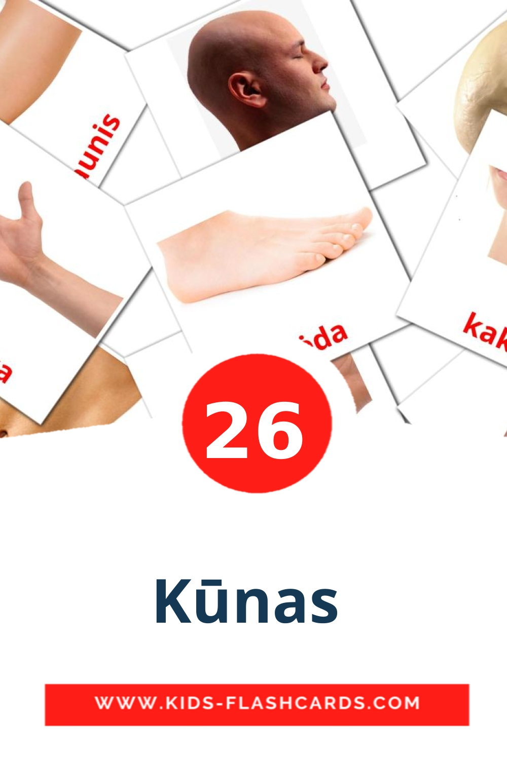 26 Kūnas  Picture Cards for Kindergarden in lithuanian