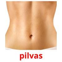 pilvas picture flashcards