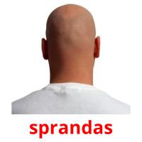 sprandas picture flashcards