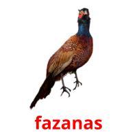 fazanas picture flashcards