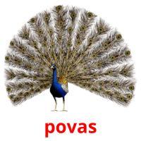 povas picture flashcards