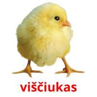 viščiukas picture flashcards