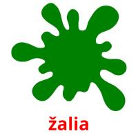 žalia picture flashcards