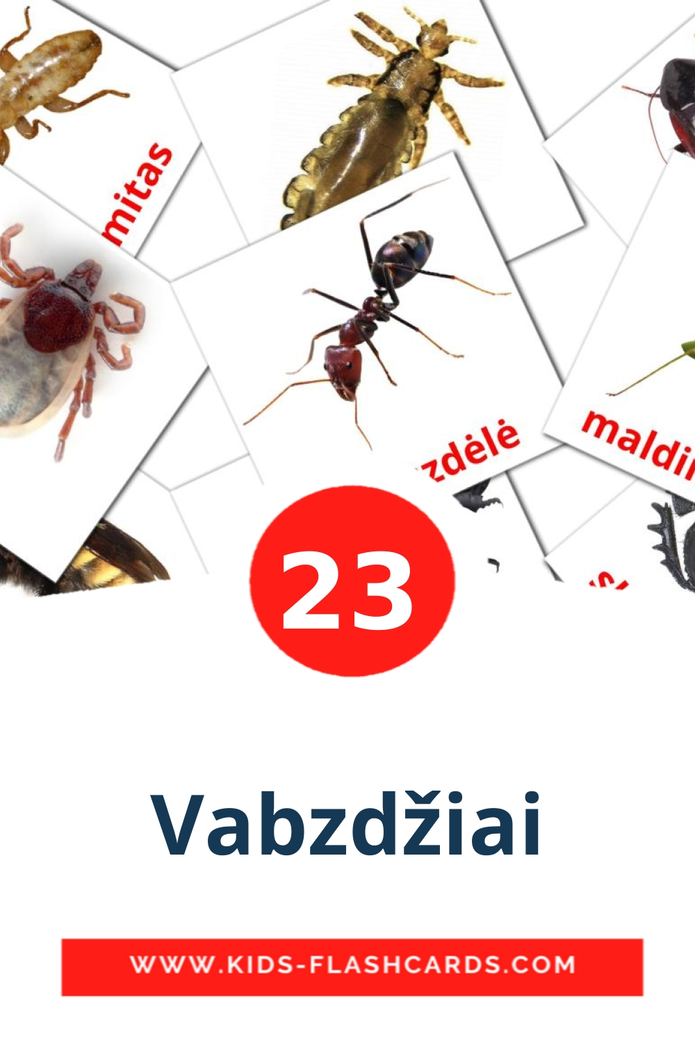 23 Vabzdžiai Picture Cards for Kindergarden in lithuanian