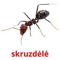skruzdėlė picture flashcards