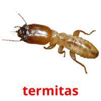 termitas picture flashcards