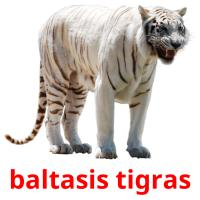 baltasis tigras picture flashcards