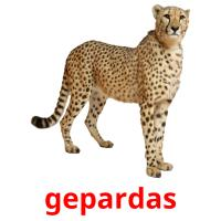 gepardas picture flashcards