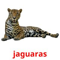 jaguaras picture flashcards