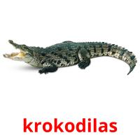 krokodilas picture flashcards