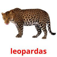 leopardas picture flashcards