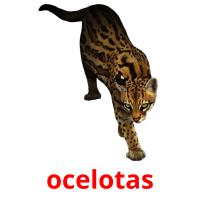 ocelotas picture flashcards