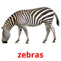 zebras picture flashcards