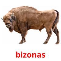 bizonas picture flashcards