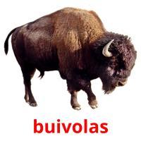 buivolas picture flashcards