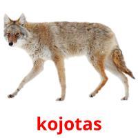 kojotas picture flashcards
