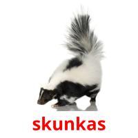 skunkas picture flashcards