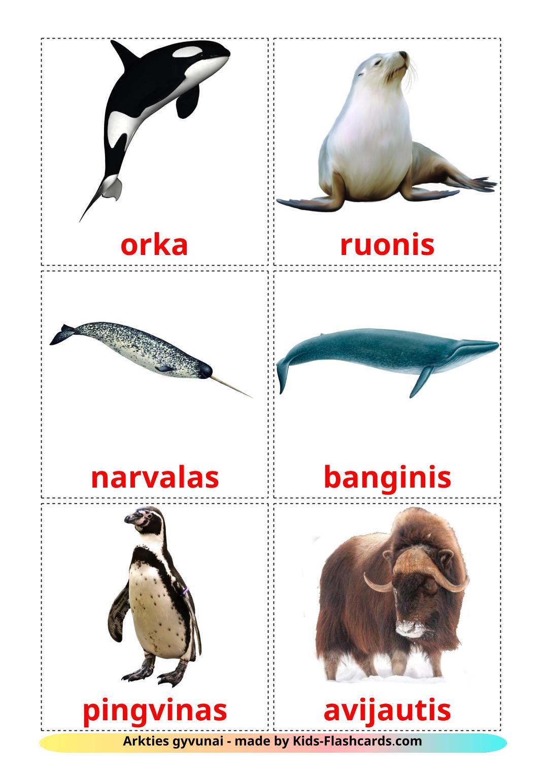 Arctic animals - 14 Free Printable lithuanian Flashcards
