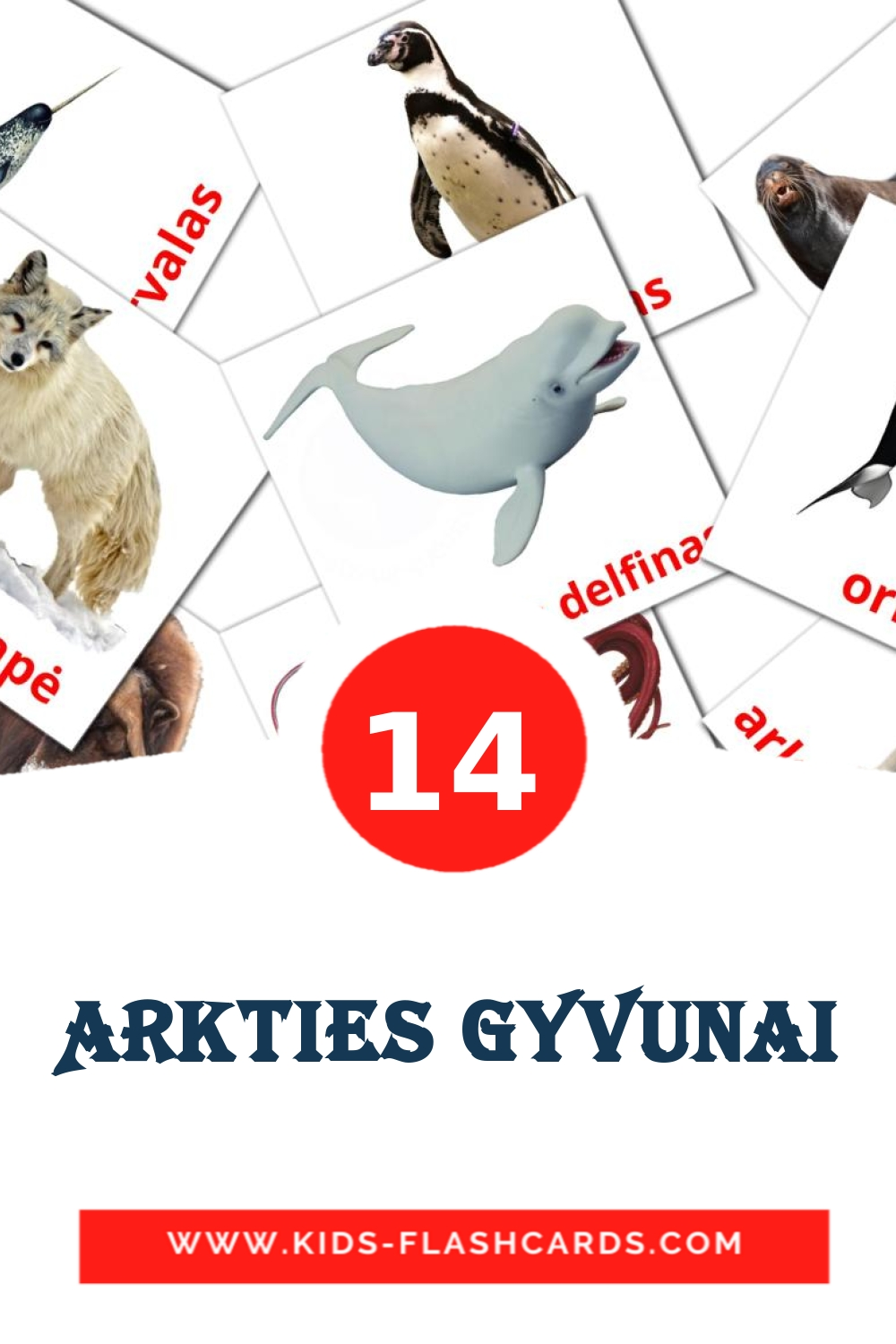 14 Arkties gyvunai Picture Cards for Kindergarden in lithuanian