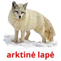 arktinė lapė picture flashcards