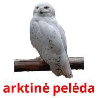 arktinė pelėda picture flashcards