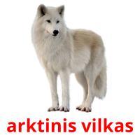 arktinis vilkas picture flashcards