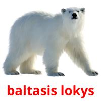 baltasis lokys picture flashcards