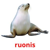 ruonis picture flashcards
