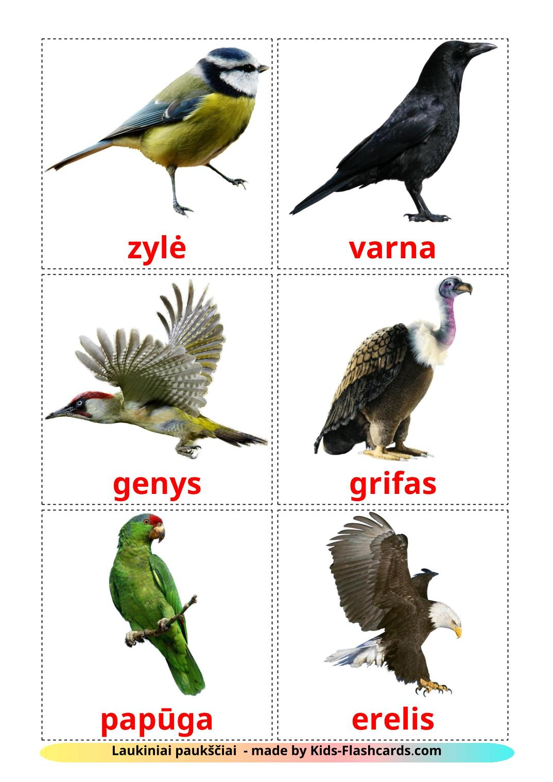 Wild birds - 17 Free Printable lithuanian Flashcards