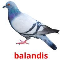 balandis picture flashcards