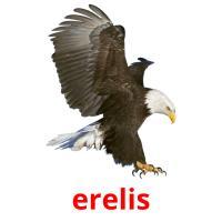 erelis picture flashcards