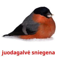 juodagalvė sniegena picture flashcards