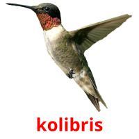 kolibris picture flashcards