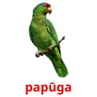 papūga picture flashcards