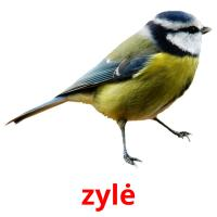 zylė picture flashcards