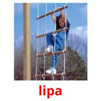 lipa picture flashcards