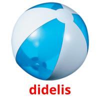 didelis picture flashcards