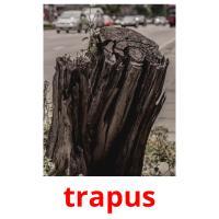 trapus picture flashcards