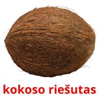 kokoso riešutas picture flashcards
