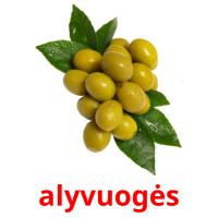 alyvuogės picture flashcards