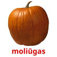 moliūgas picture flashcards