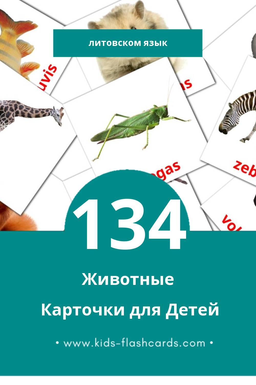 """""""Gyvūnai"""" - Визуальный Литовском Словарь для Малышей (134 картинок)"""