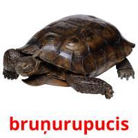 bruņurupucis picture flashcards