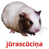 jūrascūciņa picture flashcards