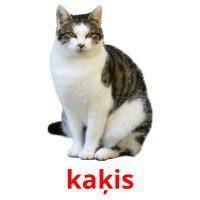 kaķis picture flashcards