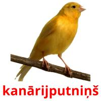 kanārijputniņš picture flashcards
