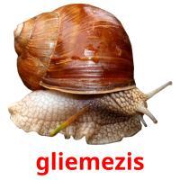 gliemezis picture flashcards