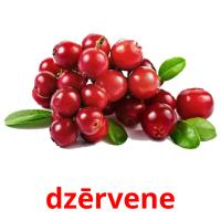 dzērvene picture flashcards