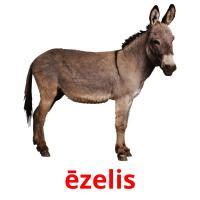 ēzelis карточки энциклопедических знаний